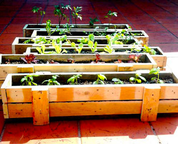 jardiniere_palette_actusite