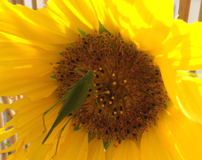 atelier jardinage et biodiversité - BD